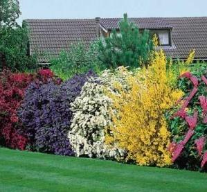Красиво цветущие кустарники