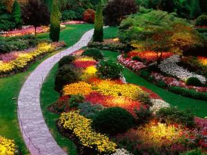 цвет контраст цветы