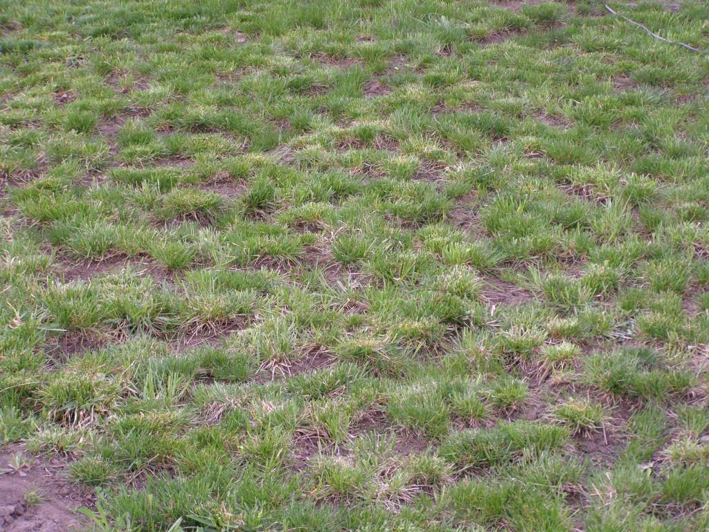 Некачественный газон