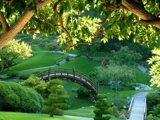 газон украсит любой сад