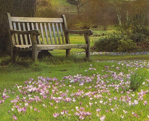 деревянная скамья в старом парке