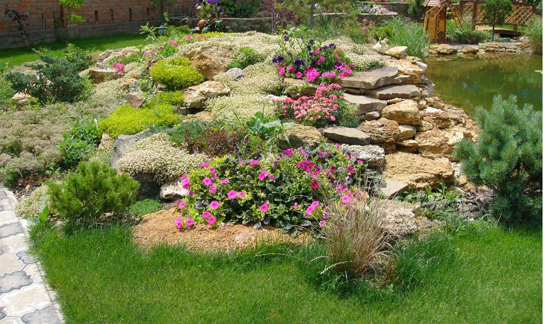 Типичные растения для альпийской горки