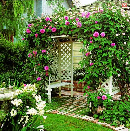 Садовая пергола на даче