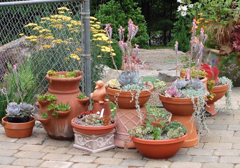 Декоративные вазы с растениями