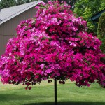 petunia-tree_b5071.970